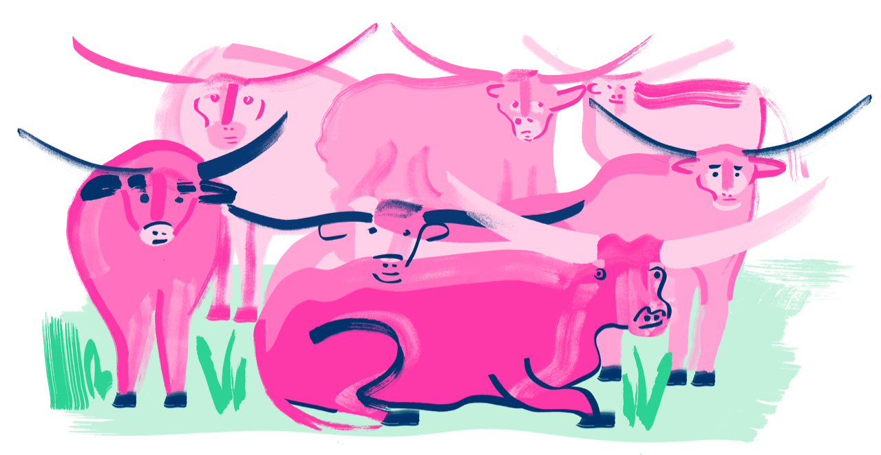 Illustration of longhorns